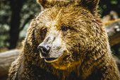 zoo, beautiful and furry brown bear, mammal