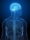 menschliche Gehirn