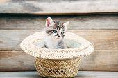 Little Kitten In The Hat