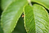 Spiderling on a leaf