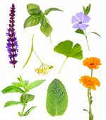 Collage of healing herbs, isolated on white