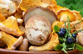 stock photo of chanterelle mushroom  - Edible mushrooms  - JPG