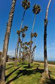 Rows Of Palm Trees Along A Beach Path