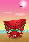 Funny Crab With Watermelon