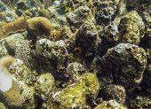 Rock Reef