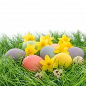 Easter Eggs And Flowers In Grass Over White