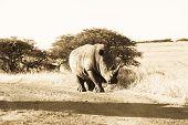 Rhinoceros Wildlife Animal