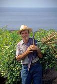 Azorian Farmer