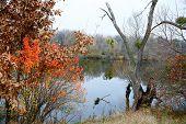 Autumn Colorful Landscape By The River