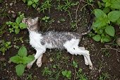 pic of decomposition  - A dead grey and white kitten layng on the ground surrounded by weeds - JPG