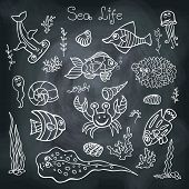 Funny Sea Life and Fish.Doodle set on school Board