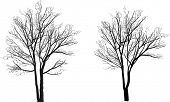 illustration with bare trees isolated on white background