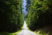Scenic Byway in Mount Rainier national park