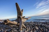foto of driftwood  - A piece of driftwood that is laying on the beach - JPG