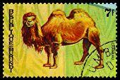 Vintage  Postage Stamp. Animals Burundi, Camel Chamenau. 1.