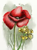 Flower composition with a red poppy. Original watercolor.