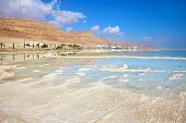 The coast of the Dead Sea in Israel. Along the shore with palm trees, which are reflected in the water. Path from the evaporated salt