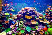 stock photo of coral reefs  - Coral Reef and Tropical Fish in Sunlight - JPG