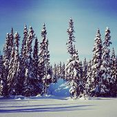 picture of blanket snow  - scenic instagram of trees covered in snow in wintertime - JPG
