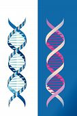 picture of pyrimidines  - Two strands of DNA  each with same basic  shape but differing components - JPG