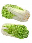 Green Beijing Cabbage.