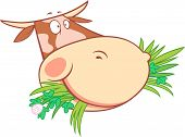 picture of cow head  - Vector illustration of a cow head eating grass - JPG