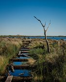 stock photo of marshes  - A hurricane damaged pier in a marsh area with a single dead tree near by - JPG