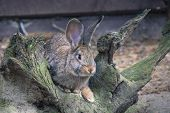image of wild-rabbit  - Wild rabbit on the nature in Poland - JPG