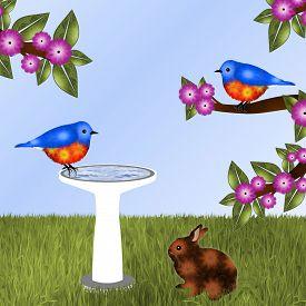 foto of bluebird  - Pair of orange and blue birds  - JPG