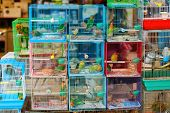 Birds in cages for sale at Birds market, Kowloon Hong Kong, popular tourist destination. poster