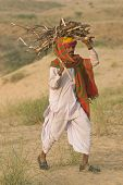 Collecting Fire Wood