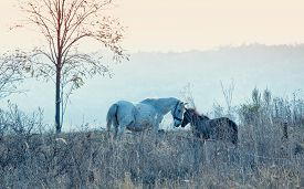 foto of colt  - Love between mare and her colt early morning nearby Stanca village Iasi Romania - JPG