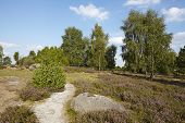 ������, ������: Luneburg Heath Small Path And Stone In The Heathland