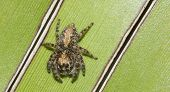 Jumping spider on green