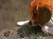 Beagle Meets Toad