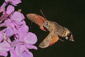 Butterfly reveler