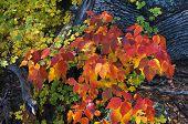 Autumn Underbrush