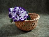 Violet Flower In A Small Basket Over Grey Background poster