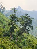 Постер, плакат: Ha Giang The Mountainous Region In Vietnam