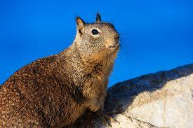 stock photo of mile  - Squirrel at the beautiful 17 mile coastline - JPG