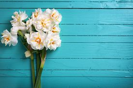 image of daffodils  - Fresh spring white daffodils or narcissus on green painted wooden planks - JPG