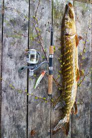 stock photo of freshwater fish  - pike freshwater fishing river big Northern fish - JPG