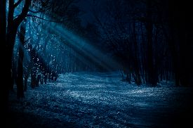 stock photo of moonlight  - Night forest with moonlight beams - JPG