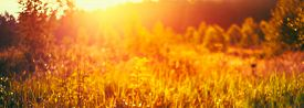 image of dry grass  - Autumn Nature Meadow Yellow Dry Grass Natural Blurred Absract Background With Bright Sunlight - JPG