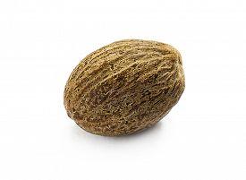 picture of musky  - Nutmeg - JPG