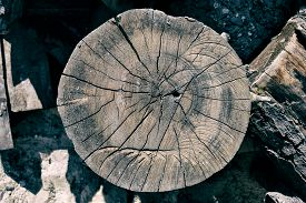 picture of lumber  - Woodpile of cut Lumber for forestry industry - JPG