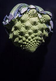 picture of romanesco  - Romanesco broccoli Twist - JPG