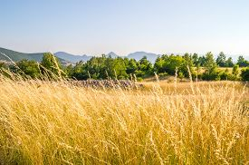 stock photo of dry grass  - Tall dry grass bending by the wind on a meadow with a dry stone wall and trees in the background and mountains on the horizon - JPG