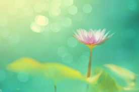 stock photo of dharma  - Soft focused image with lotus and blur bokeh background De focused with flower and blur back ground Abstract beautiful nature background - JPG