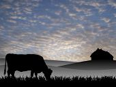 pic of animal silhouette  - cow on pasture at sunset in summer - JPG